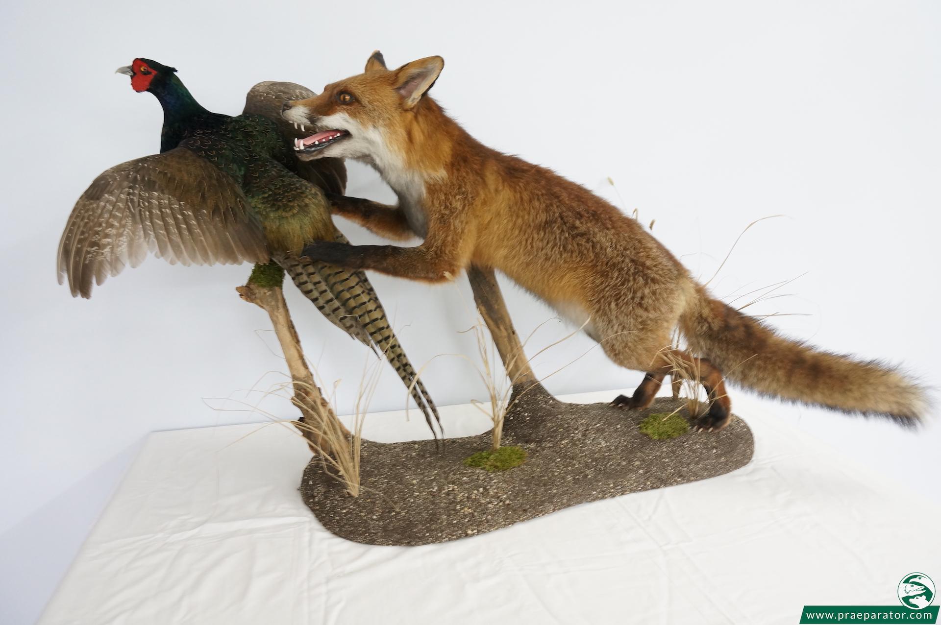 Jagd- und sonstige Tierpräparation