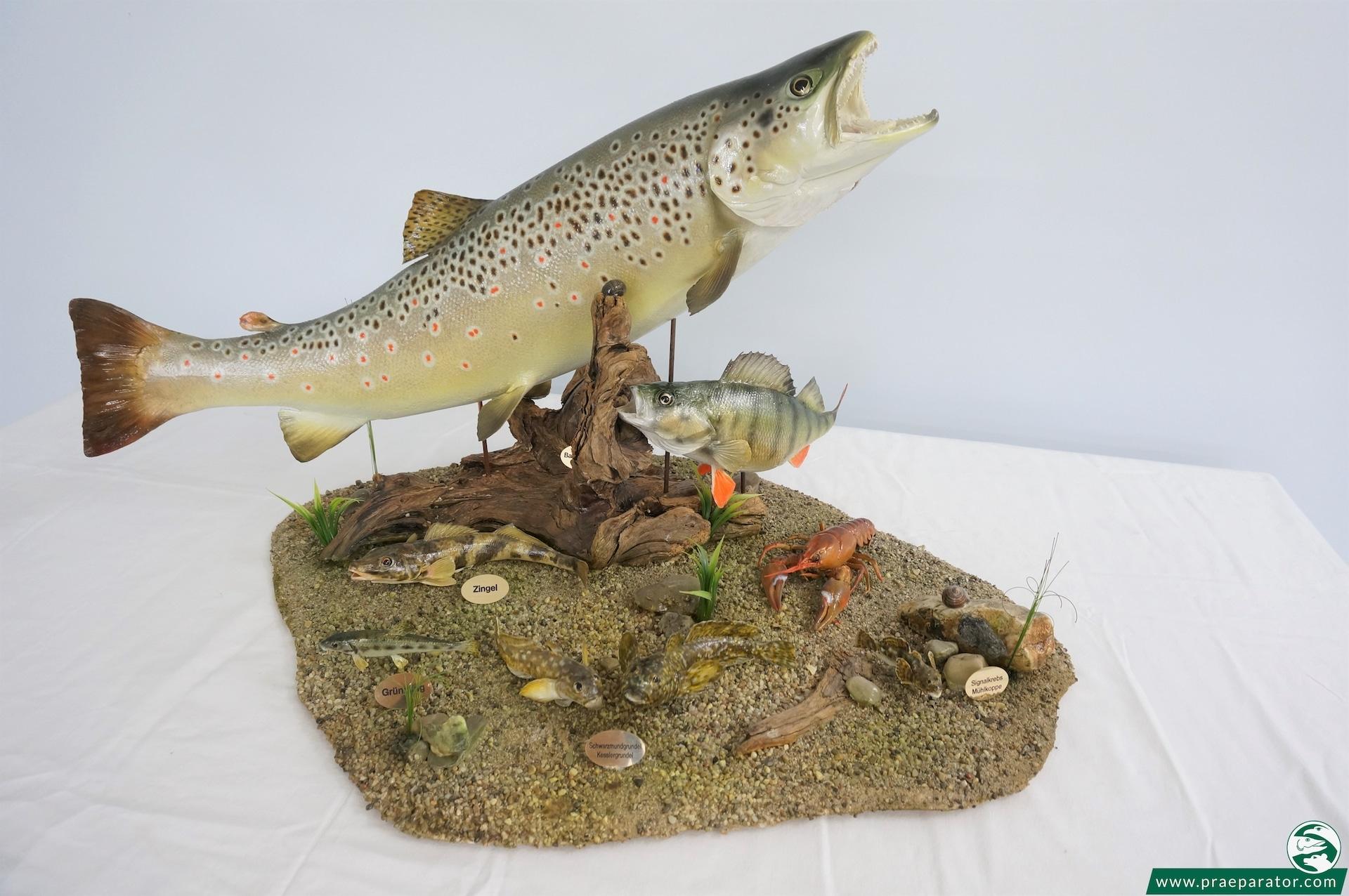Fischpräparation