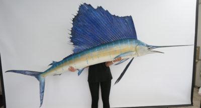 Segelfisch_3_hofinger_praeparator_com